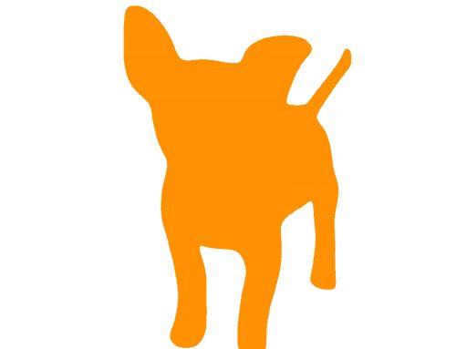 Oranje honden