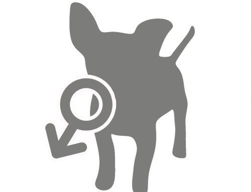 Castratie honden